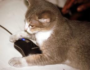Katze und Maus in den Senioren-Computerkursen