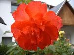 Als Dankeschön für die Unterstützung meines Crowdfunding-Projektes erhältst du 10 Blumenfotos